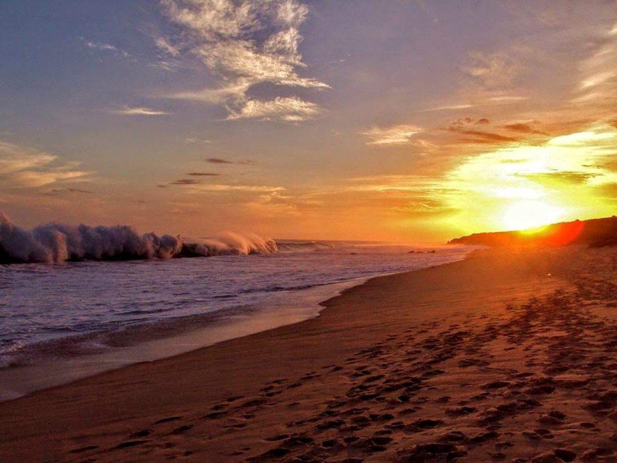 Hibiscus & Nomada : - - Sunrise
