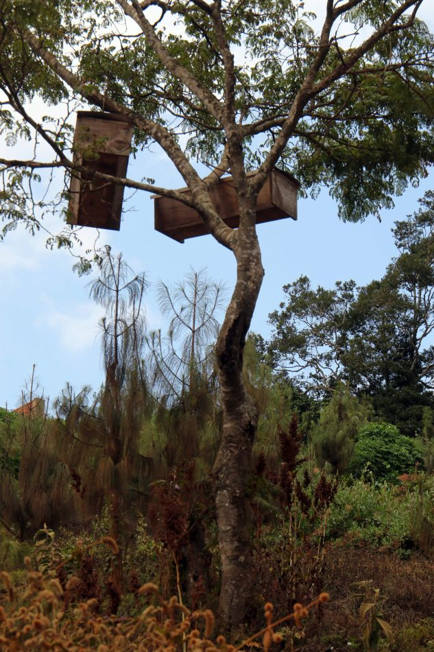 Anthony Ellis Photography: Mzungu - Tree Hives