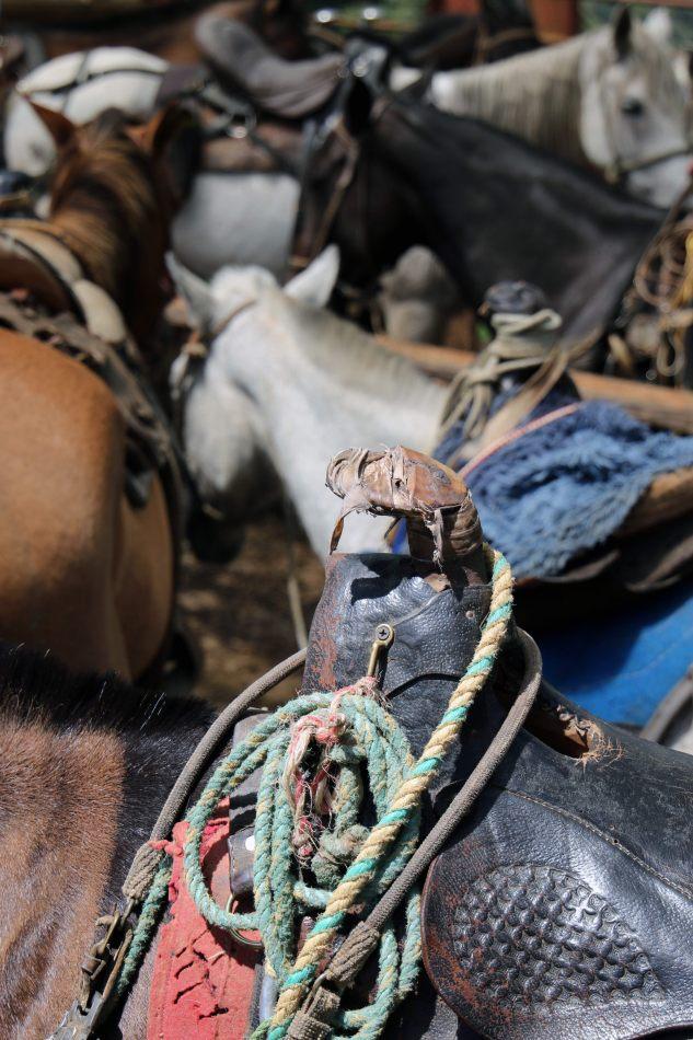 Anthony Ellis Photography: Antes del Refer� ndum - Ropes and Horses