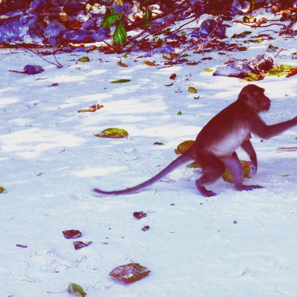 Hibiscus & Nomada : - - Monkey Beach, Koh Phi Phi