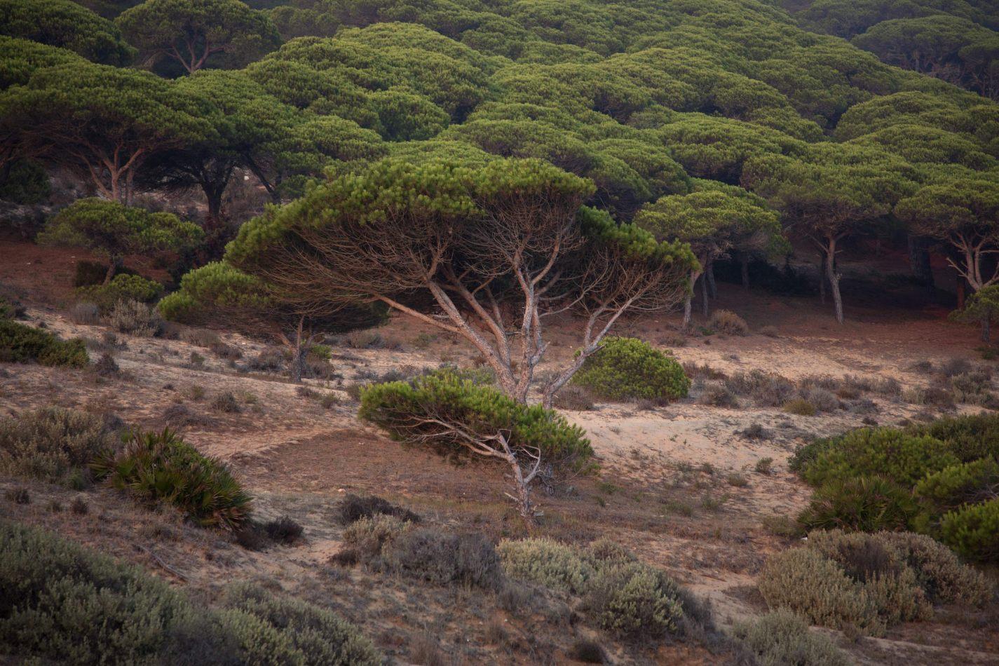 Anthony Ellis Photography: Around the Edges - Tree Line