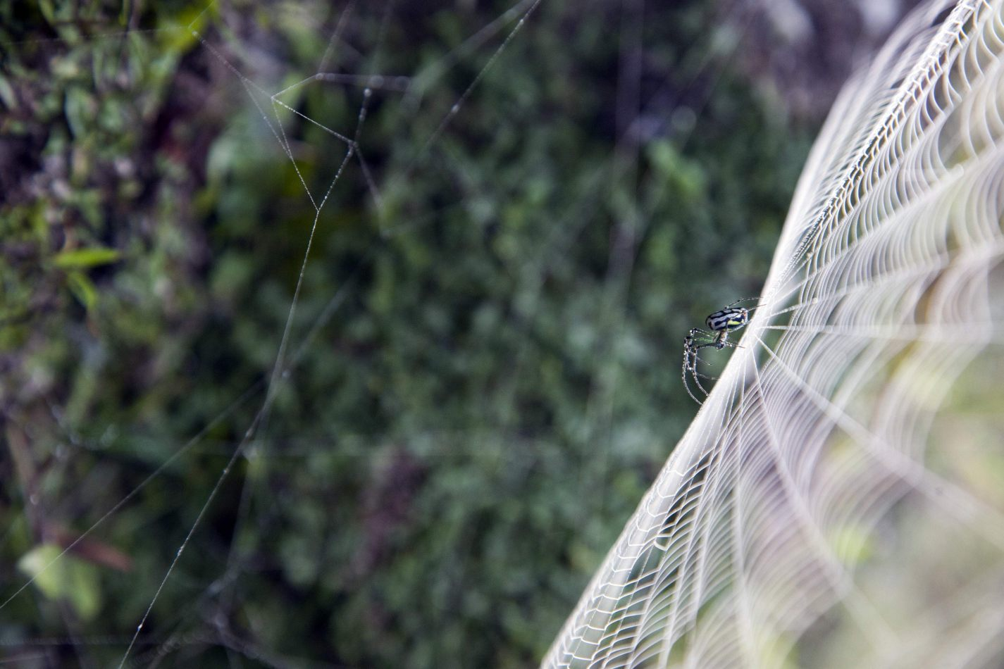 Anthony Ellis Photography: Soldiers to Butterflies - Dew Covered Spider-Web
