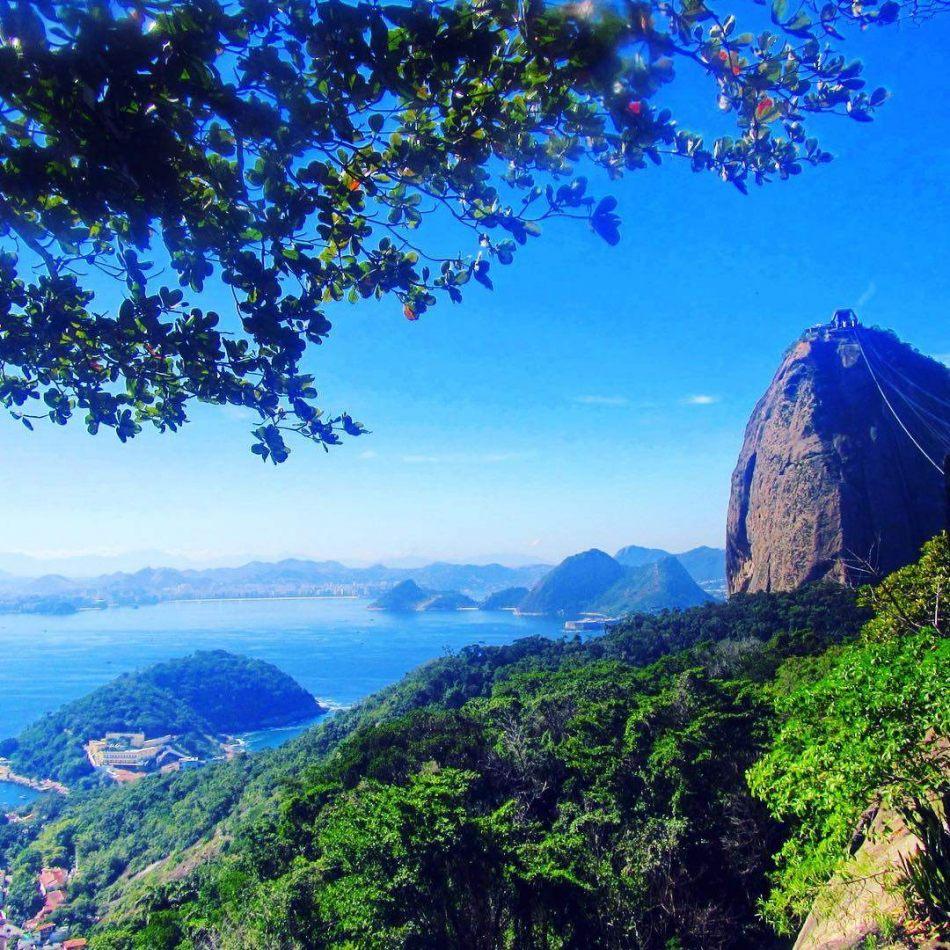 Hibiscus & Nomada : Brazil - Sugar Loaf