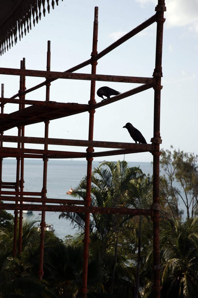 Anthony Ellis Photography: Mzungu - Birds on Scaffolding