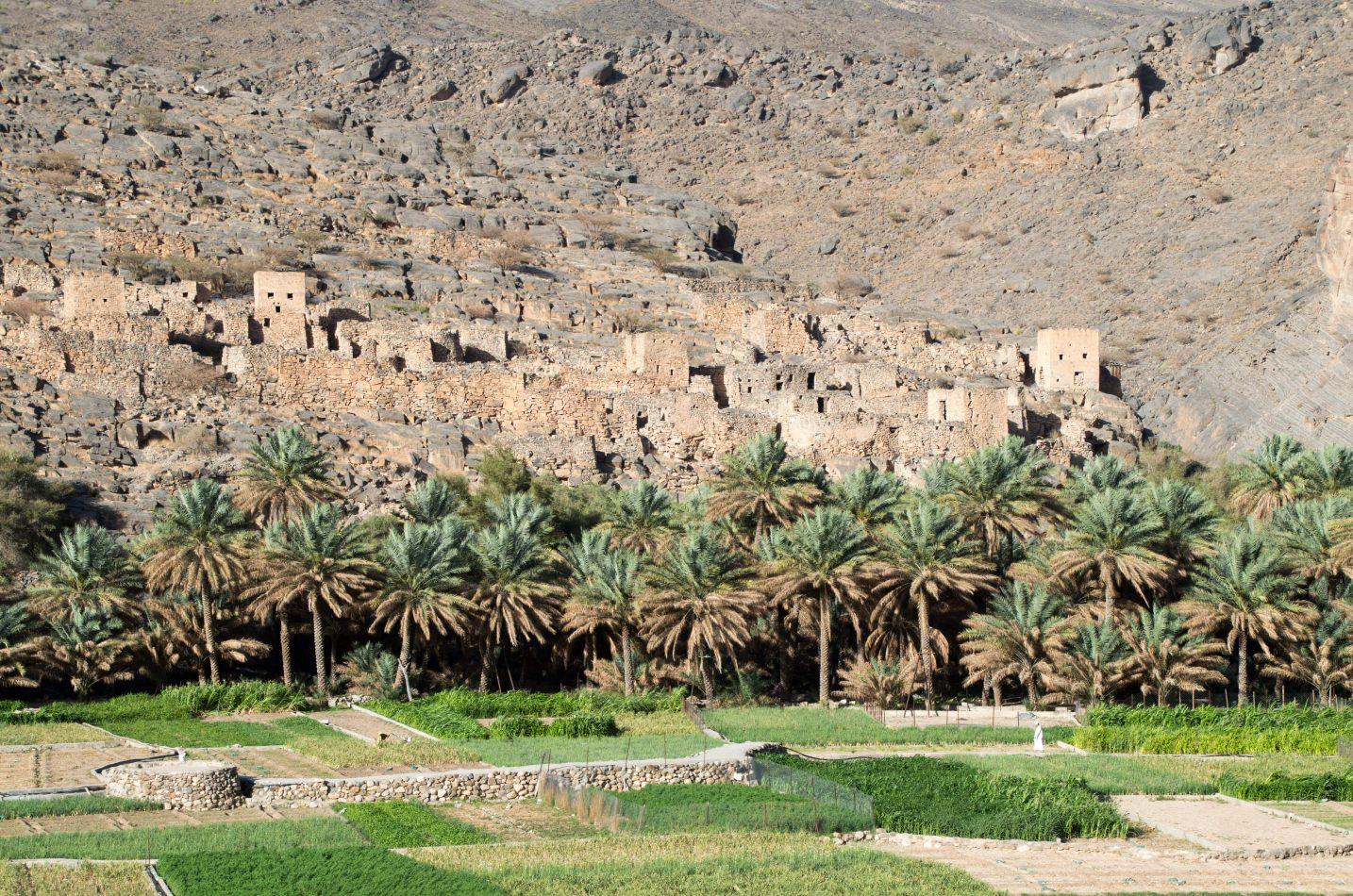 Hibiscus & Nomada : Oman - Guhl