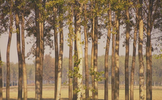 Lodigiano Countryside