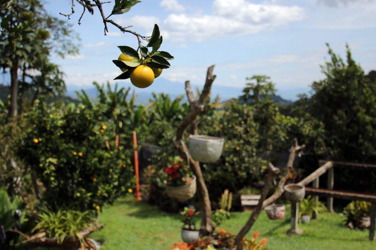 Anthony Ellis Photography: Antes del Refer� ndum - Lemons