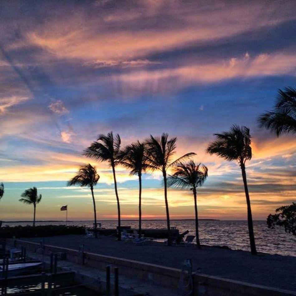Hibiscus & Nomada : Florida - Keys