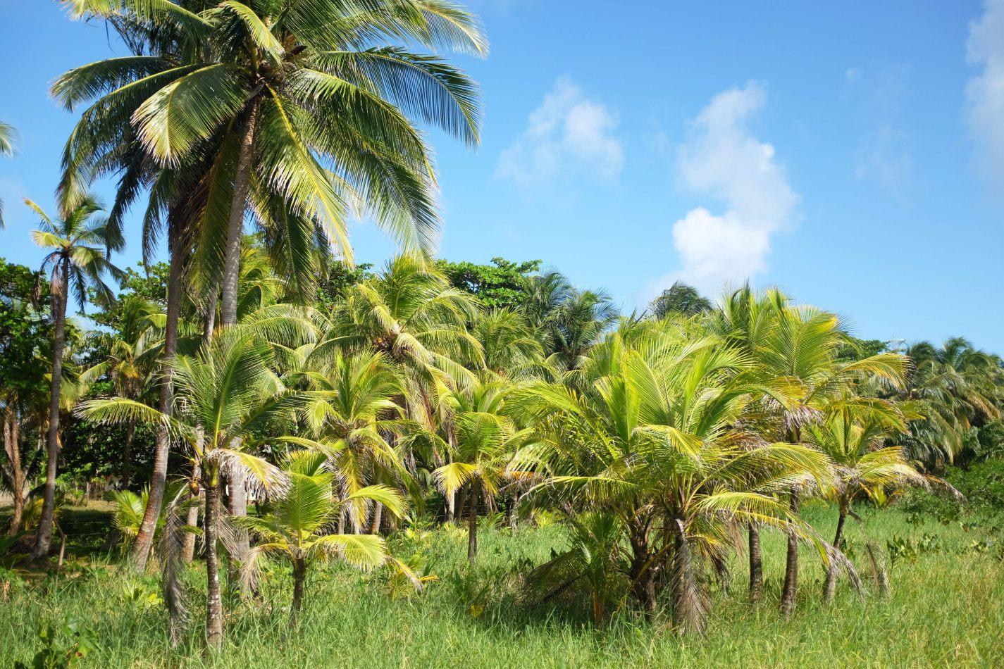 Hibiscus & Nomada : - - Big Corn Island