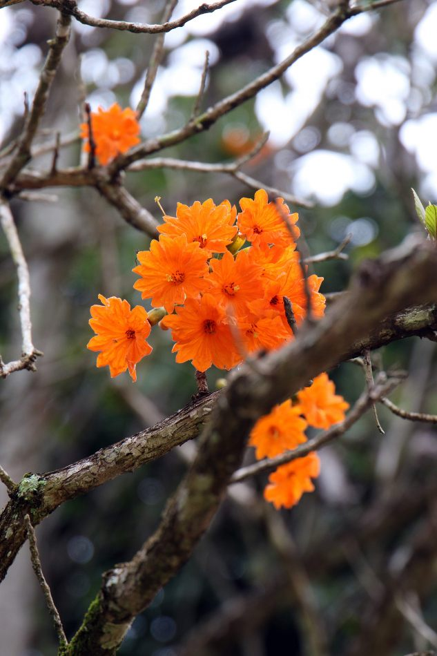 Anthony Ellis Photography: Small Sacrifices - Orange Blooms