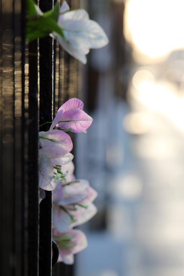 Anthony Ellis Photography: Small Sacrifices - Petals and Bars