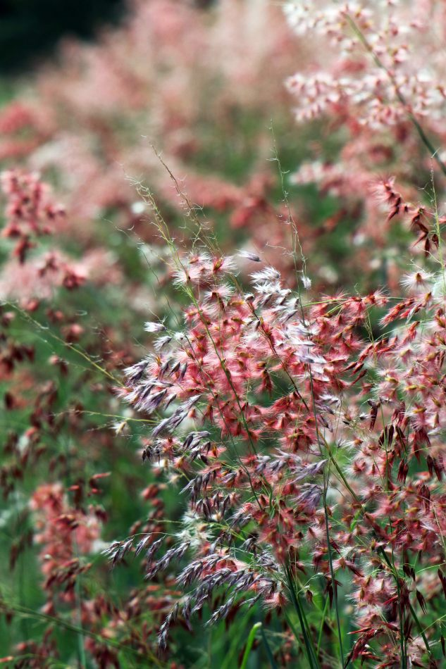 Anthony Ellis Photography: Small Sacrifices - Pink Grasses