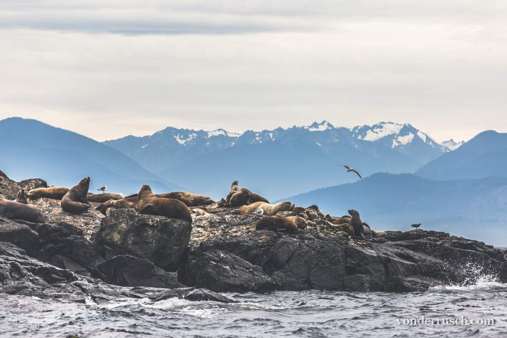 Lounging on the Rocks     Vancouver Island Canada