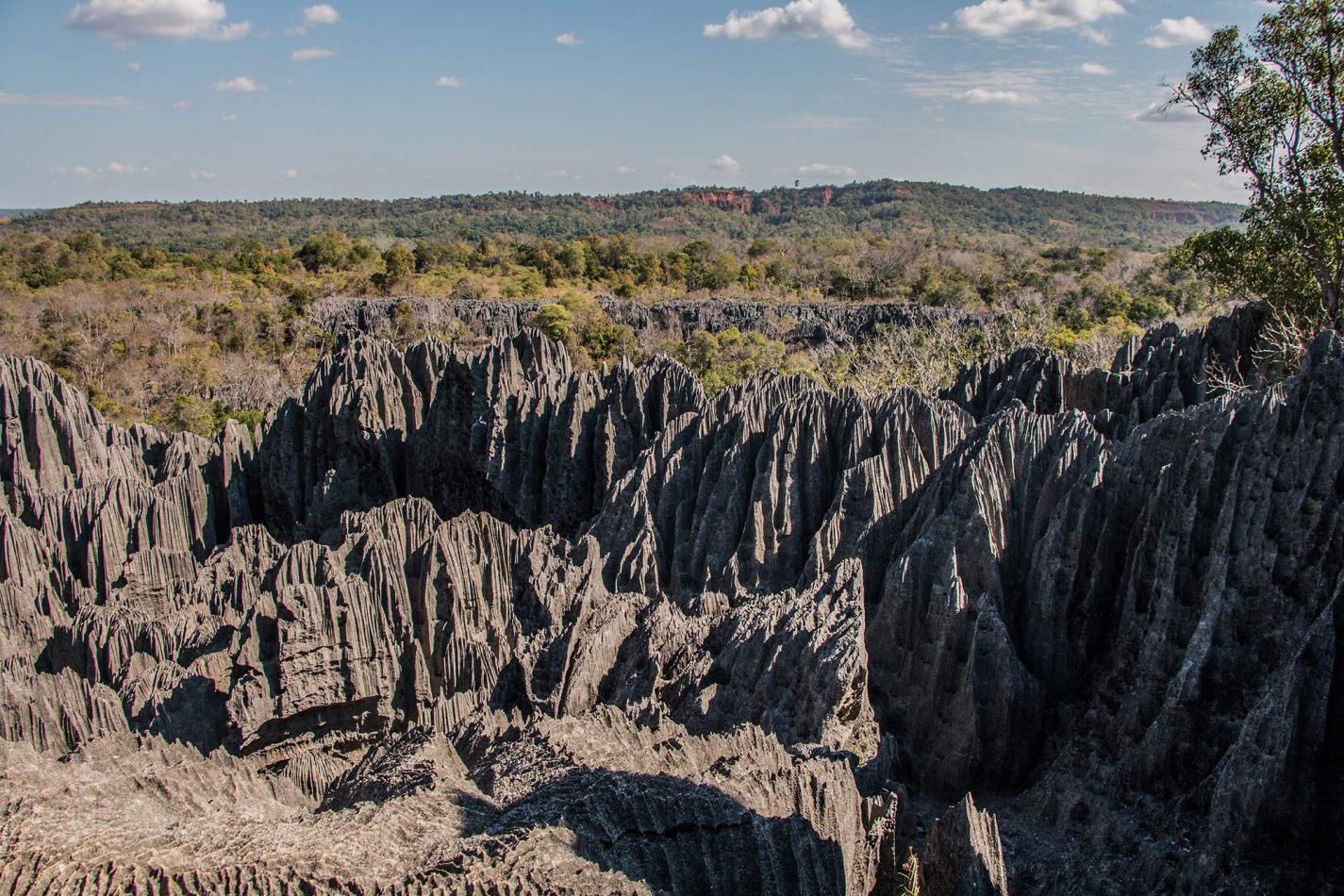 Hibiscus & Nomada : Madagascar
