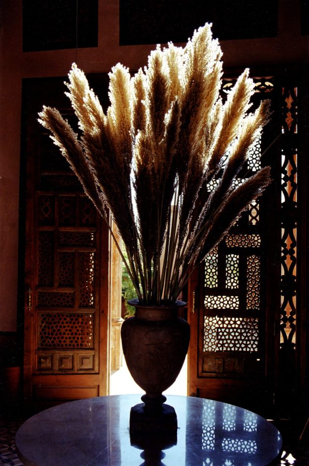 Anthony Ellis Photography: Submit to the Will - Ferns in the Al-Moudira