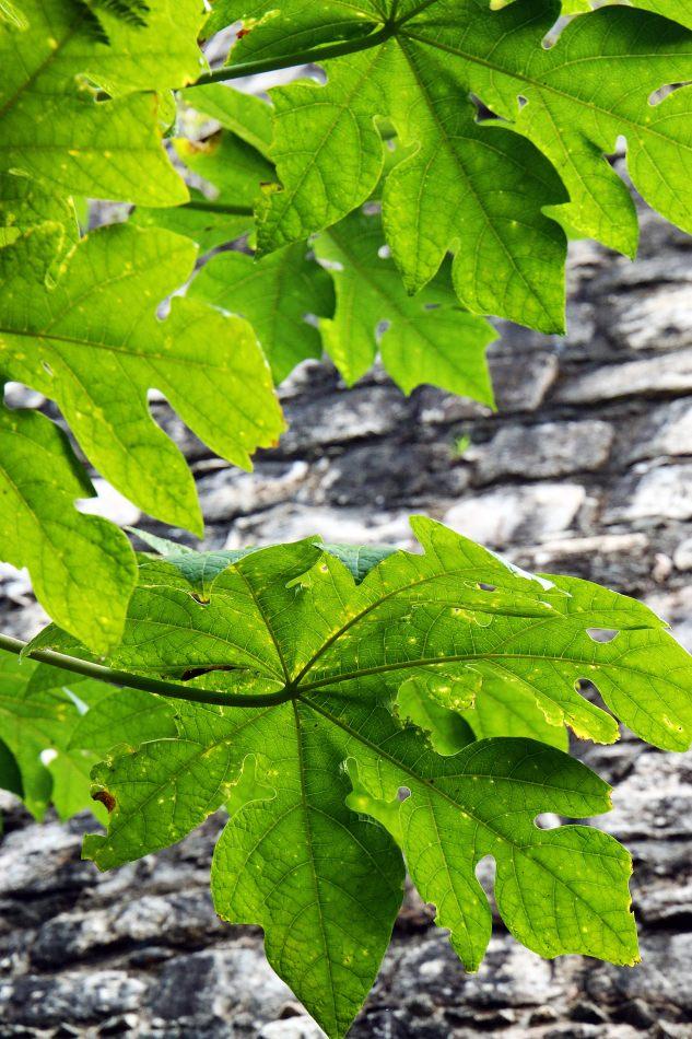Anthony Ellis Photography: Small Sacrifices - Leaves