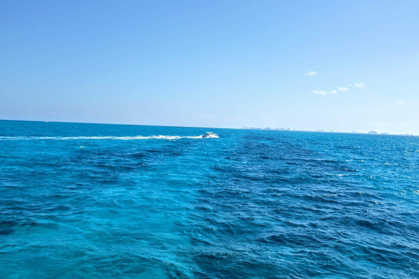 Hibiscus & Nomada : - - Caribbean Sea
