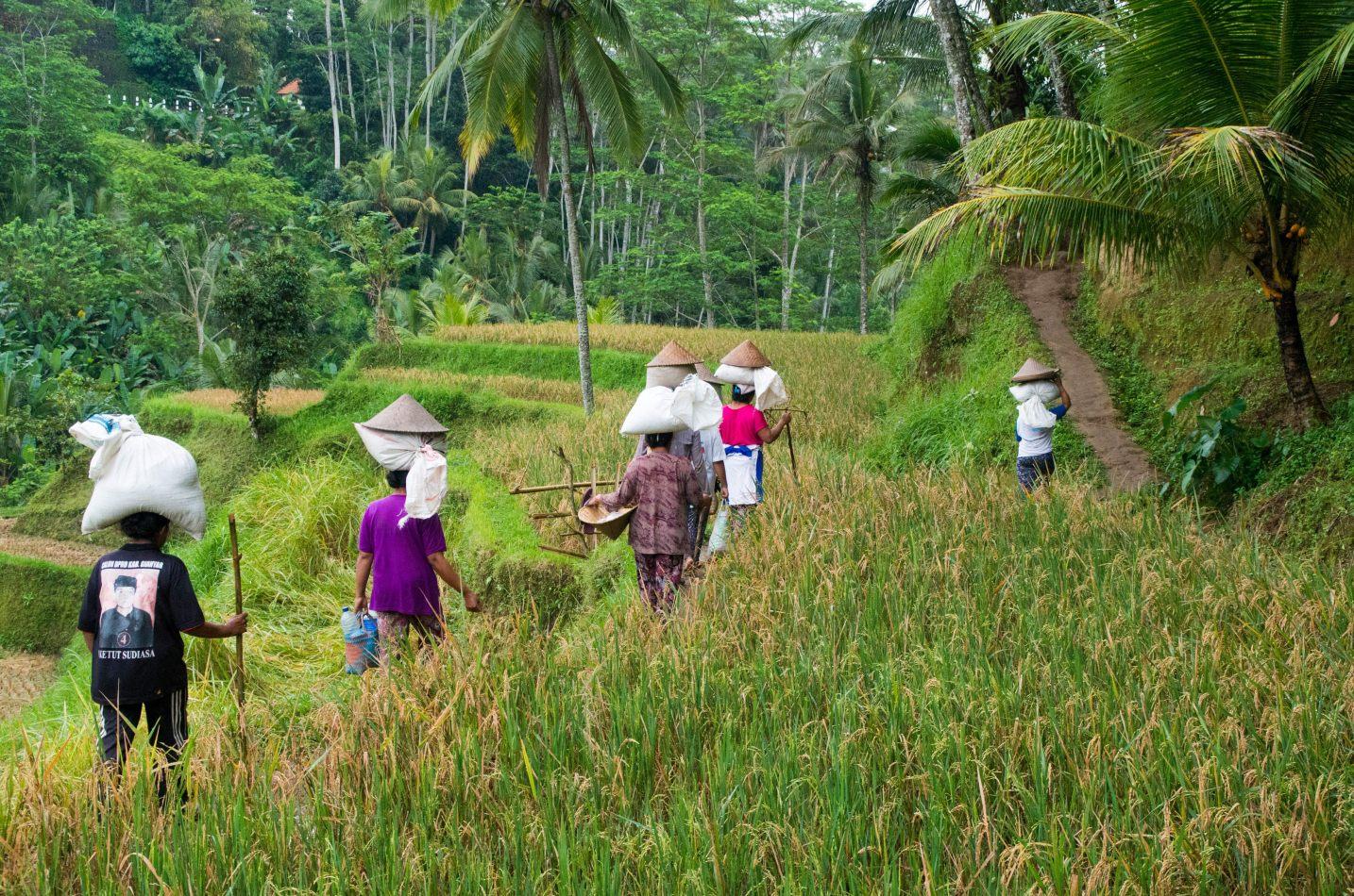 Hibiscus & Nomada : Bali