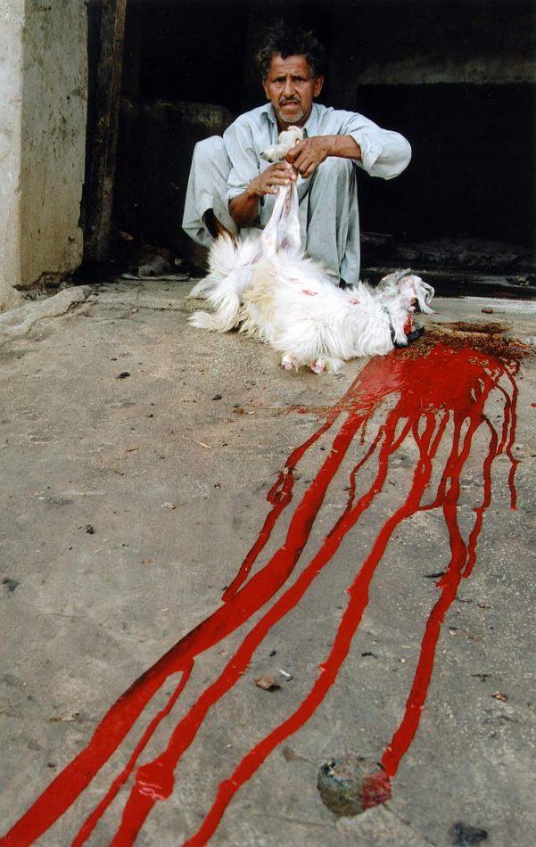Anthony Ellis Photography: Zindabad - Halal Meat