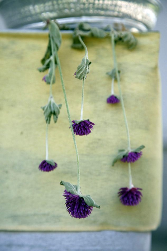 Anthony Ellis Photography: Houses without Smoke - Purple Thistles on a Shrine