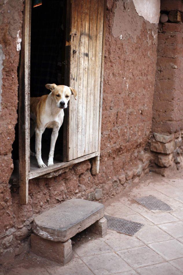 Anthony Ellis Photography: Apus - Doorway Dog