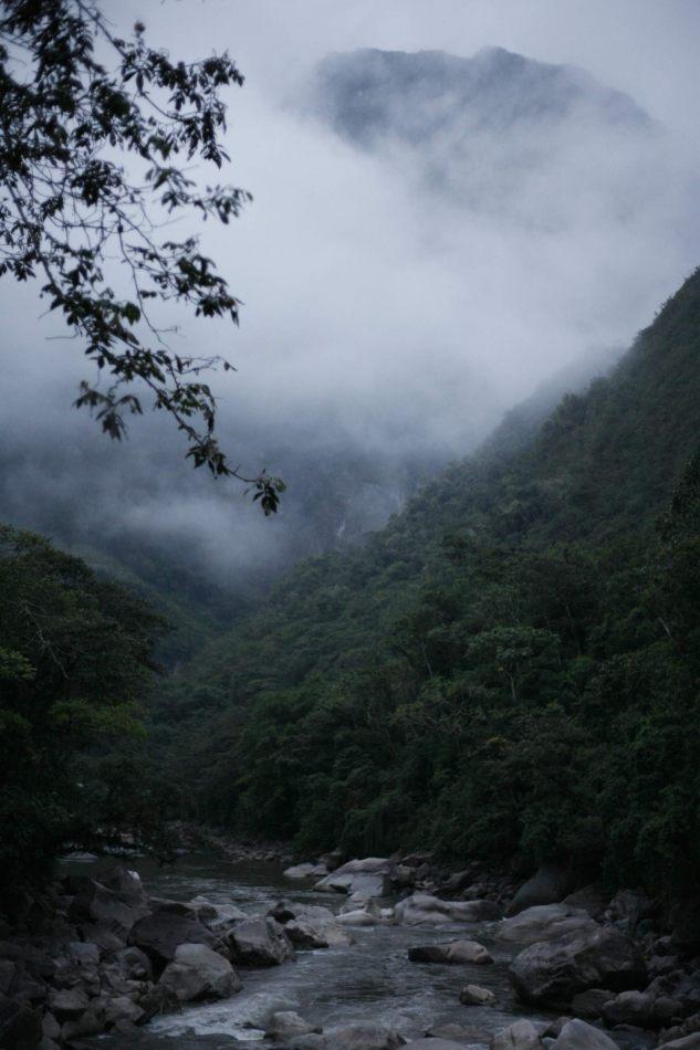 Anthony Ellis Photography: Apus - Jungle