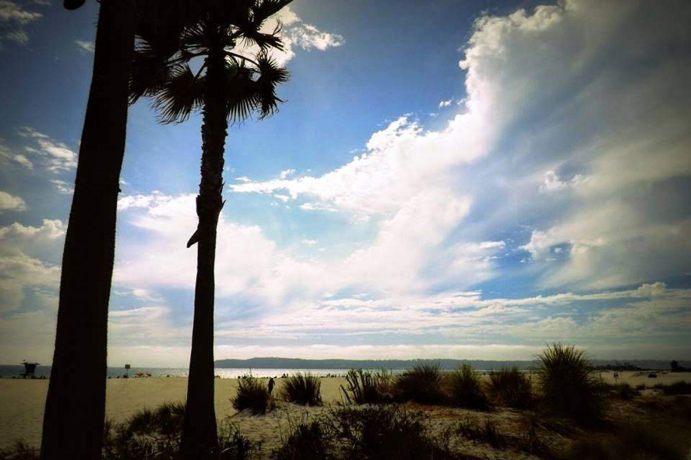 Hibiscus & Nomada : - - San Diego