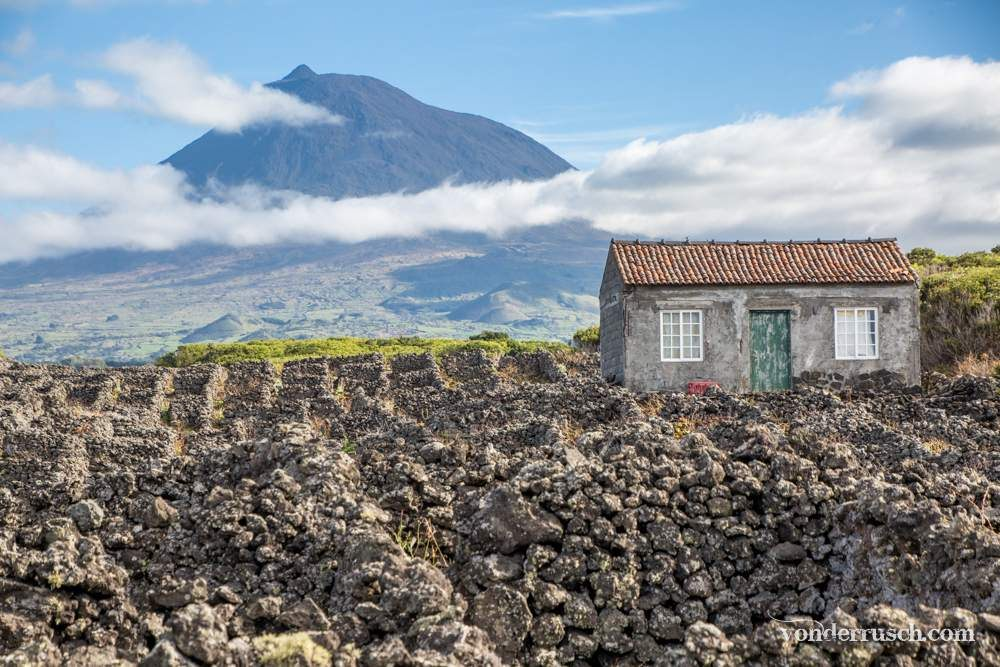 Volcano Vineyards     Pico Island Azores