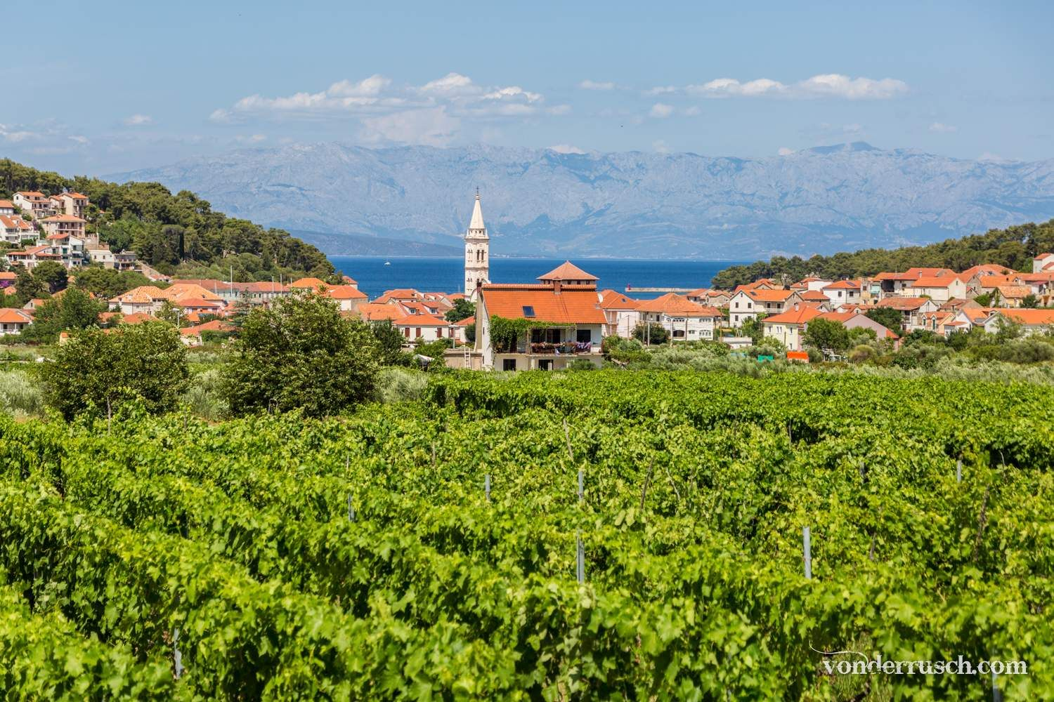 Vineyards of Jelsa     Hvar Island Croatia