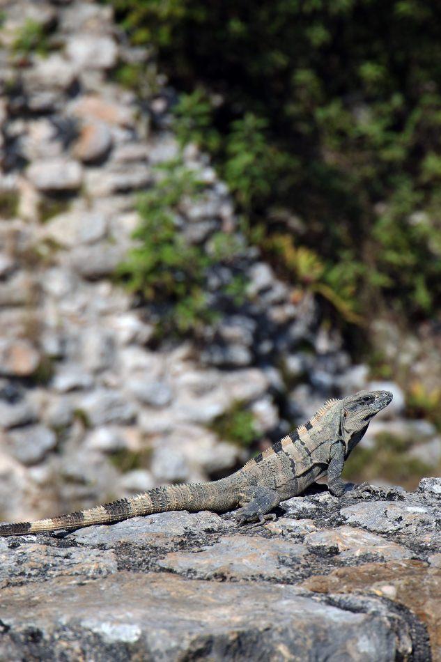 Anthony Ellis Photography: Small Sacrifices - Ruin Lizards