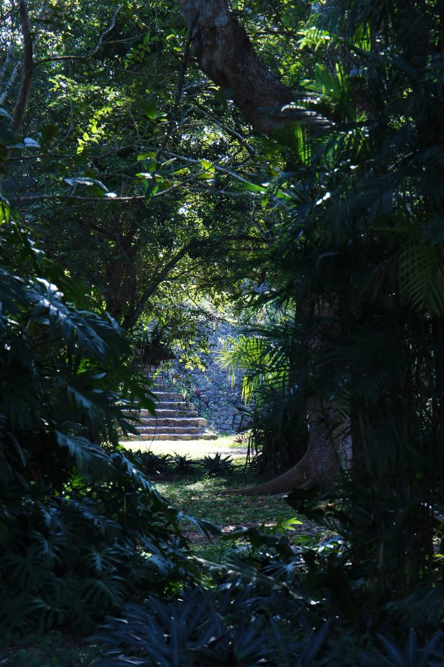 Anthony Ellis Photography: Small Sacrifices - Steps in the Jungle