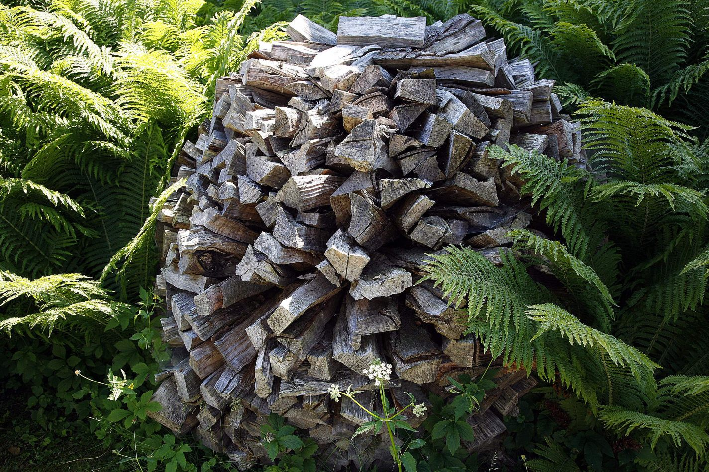 Anthony Ellis Photography: Silent Afternoons - Woodpile