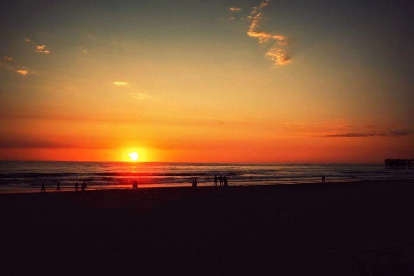 Hibiscus & Nomada : - - Pacific Beach