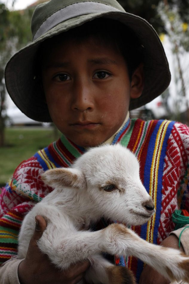 Anthony Ellis Photography: Apus - Little Shepherd