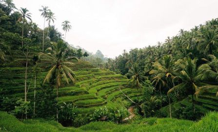 Exploring Ubud, Bali
