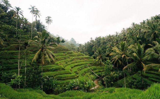 Exploring Ubud  Bali