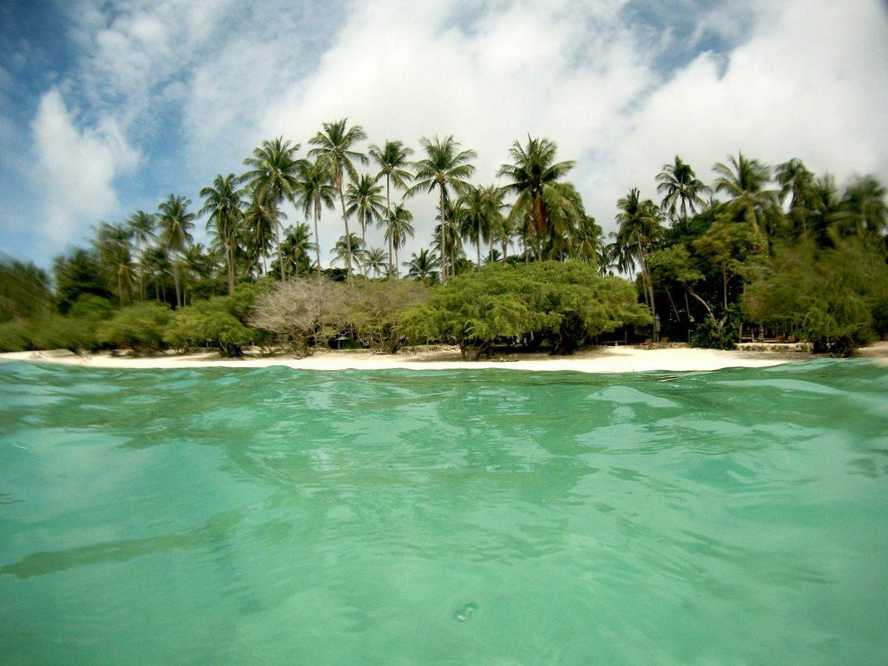 Hibiscus & Nomada : - - Shark Bay, Koh Tao