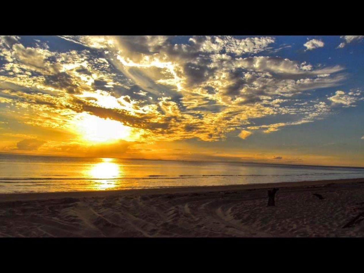 Hibiscus & Nomada : Australia - Surfers Paradise