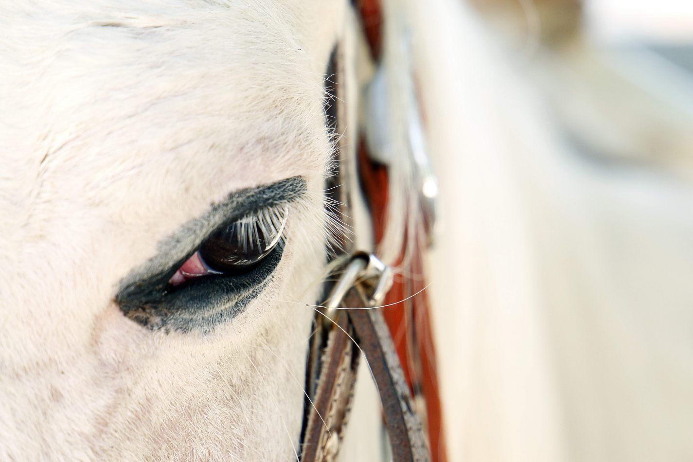 Anthony Ellis Photography: Small Sacrifices - Granito