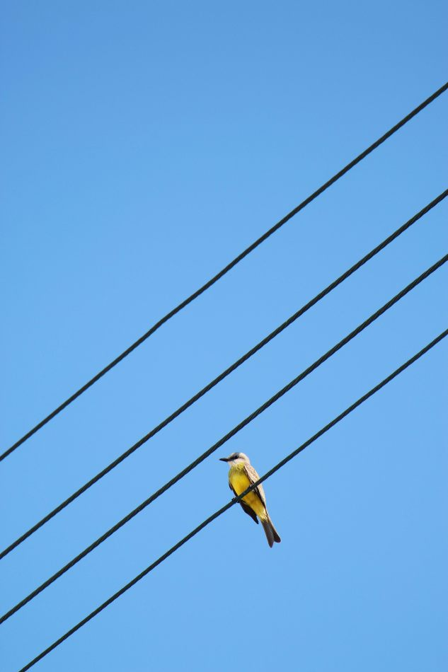 Anthony Ellis Photography: Small Sacrifices - Bird on a Wire