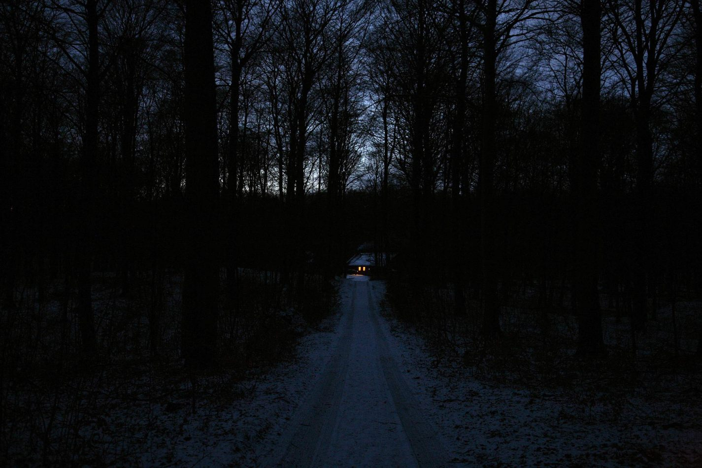 Anthony Ellis Photography: Silent Afternoons - Lights in a Dark Wood
