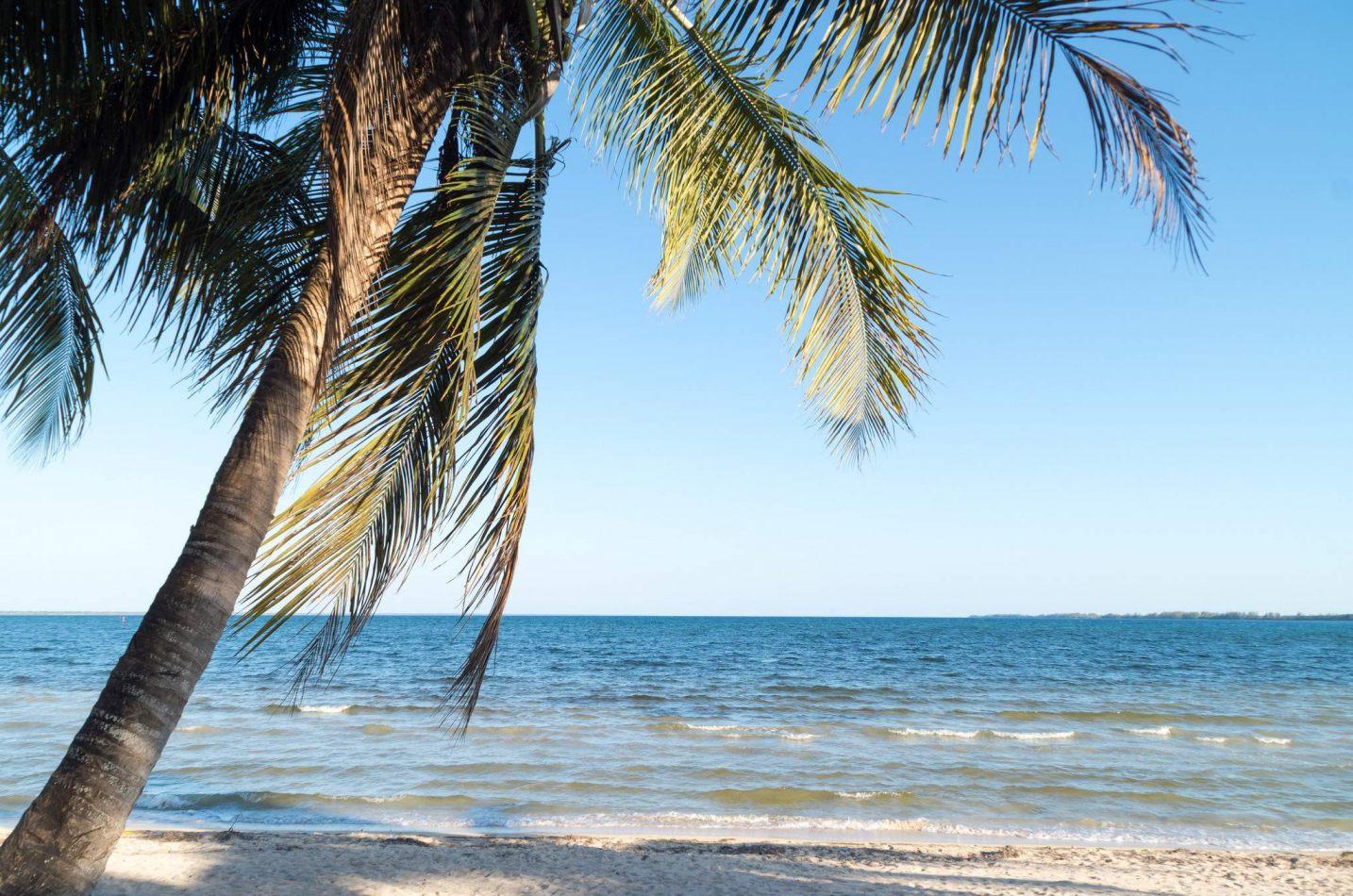 Hibiscus & Nomada : Cuba - Cayo Jutias