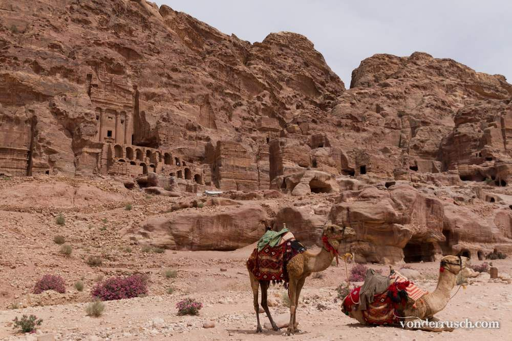 Rose City Camels     Petra Jordan