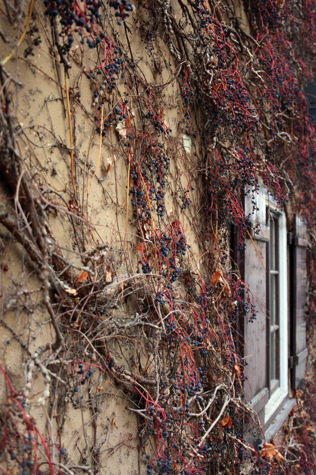 Anthony Ellis Photography: Das Ist - Winter Vine