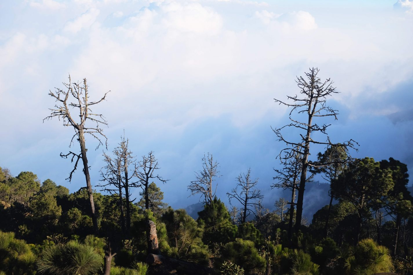 Hibiscus & Nomada : - - Hiking Acatenango