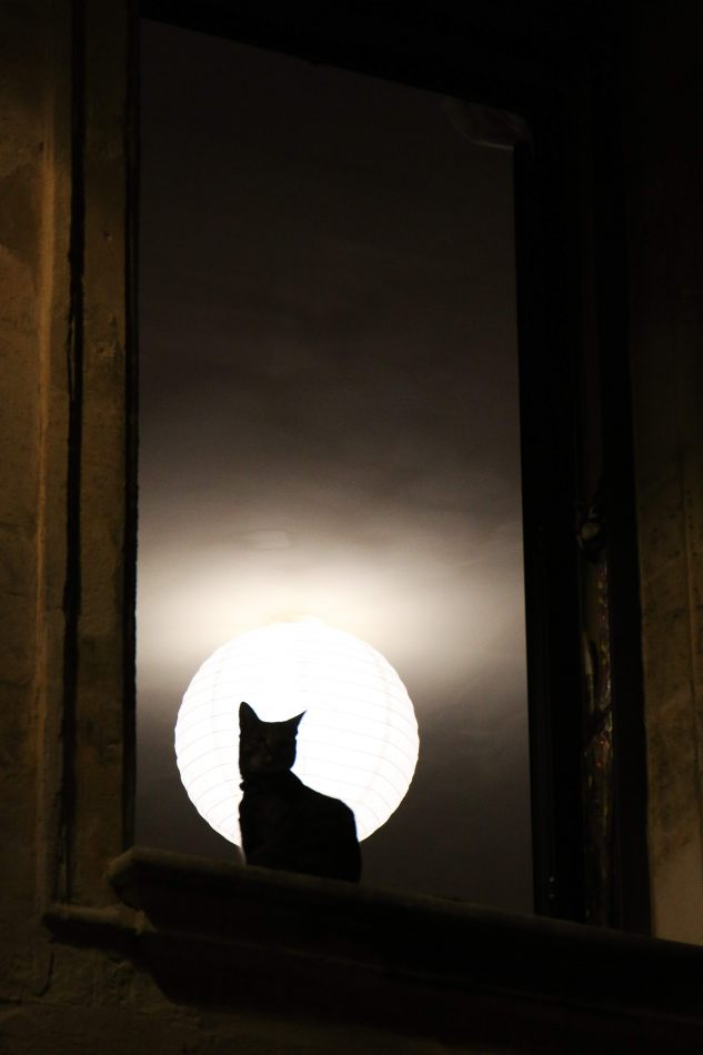 Anthony Ellis Photography: Libertine - The Cat and the Paper Moon