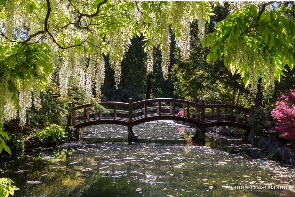 Japanese Garden     Victoria Canada