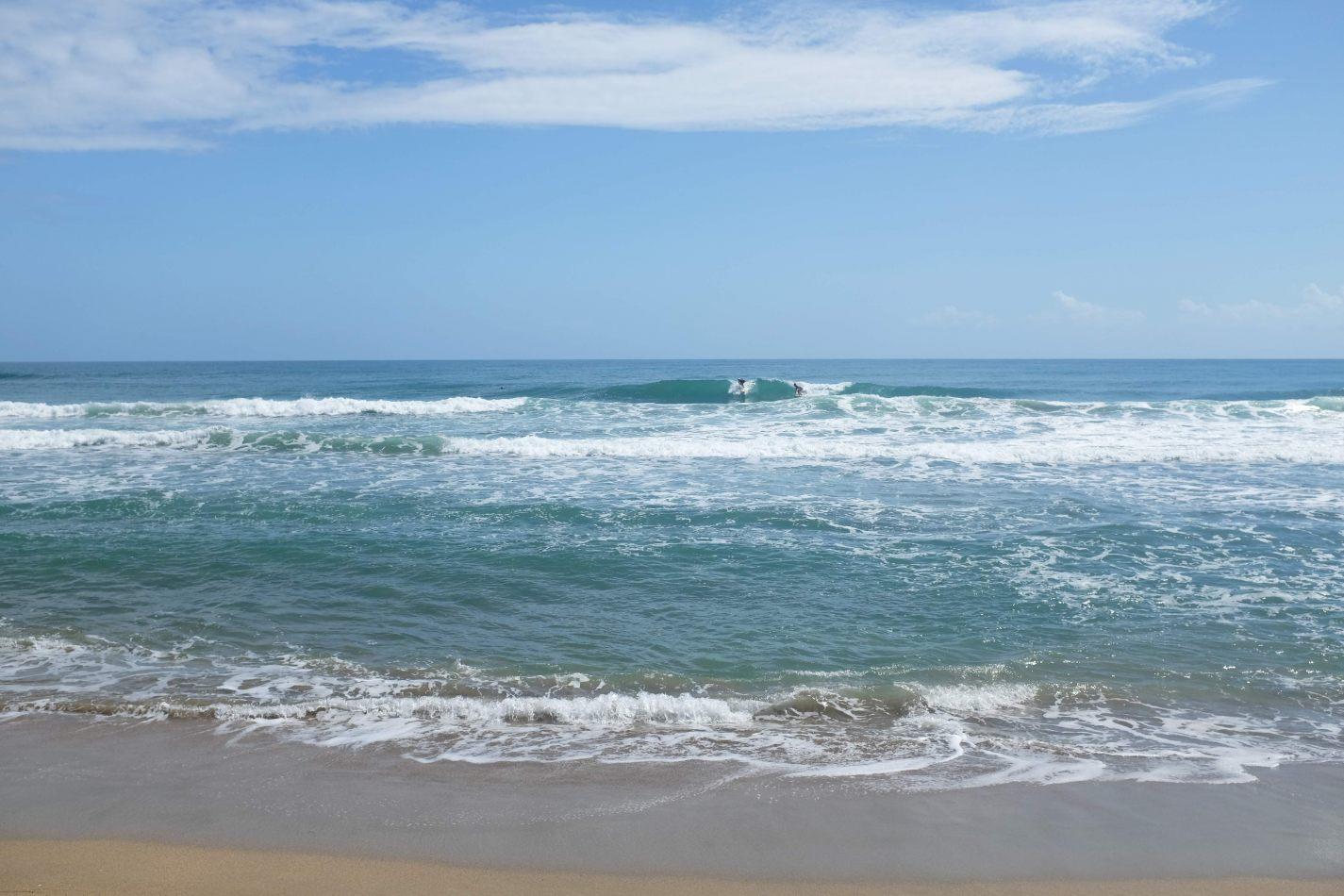 Hibiscus & Nomada : - - Playa Cocles