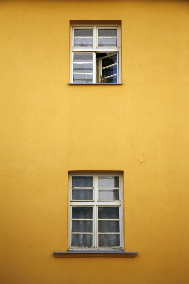 Anthony Ellis Photography: Symphonia - Cat in the Window of a Mustard-coloured House