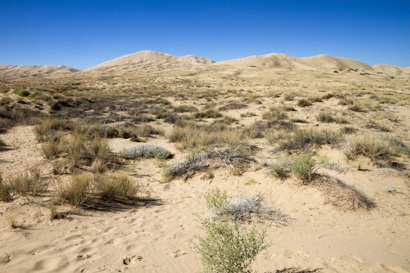 Storvandre: Mojave